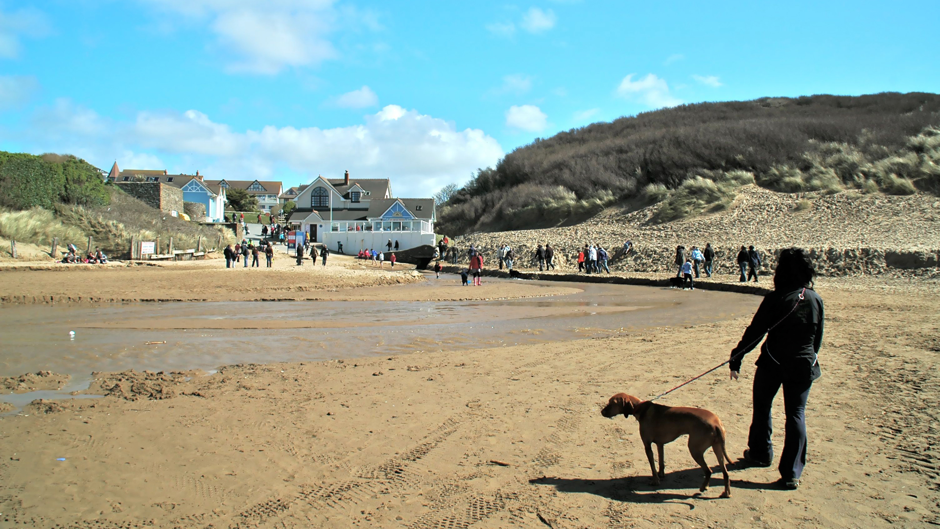 dogs-on-Woolacombe-beach