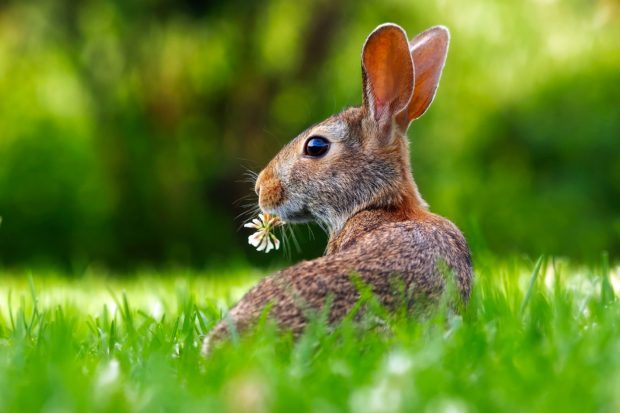 Bunny at Easter