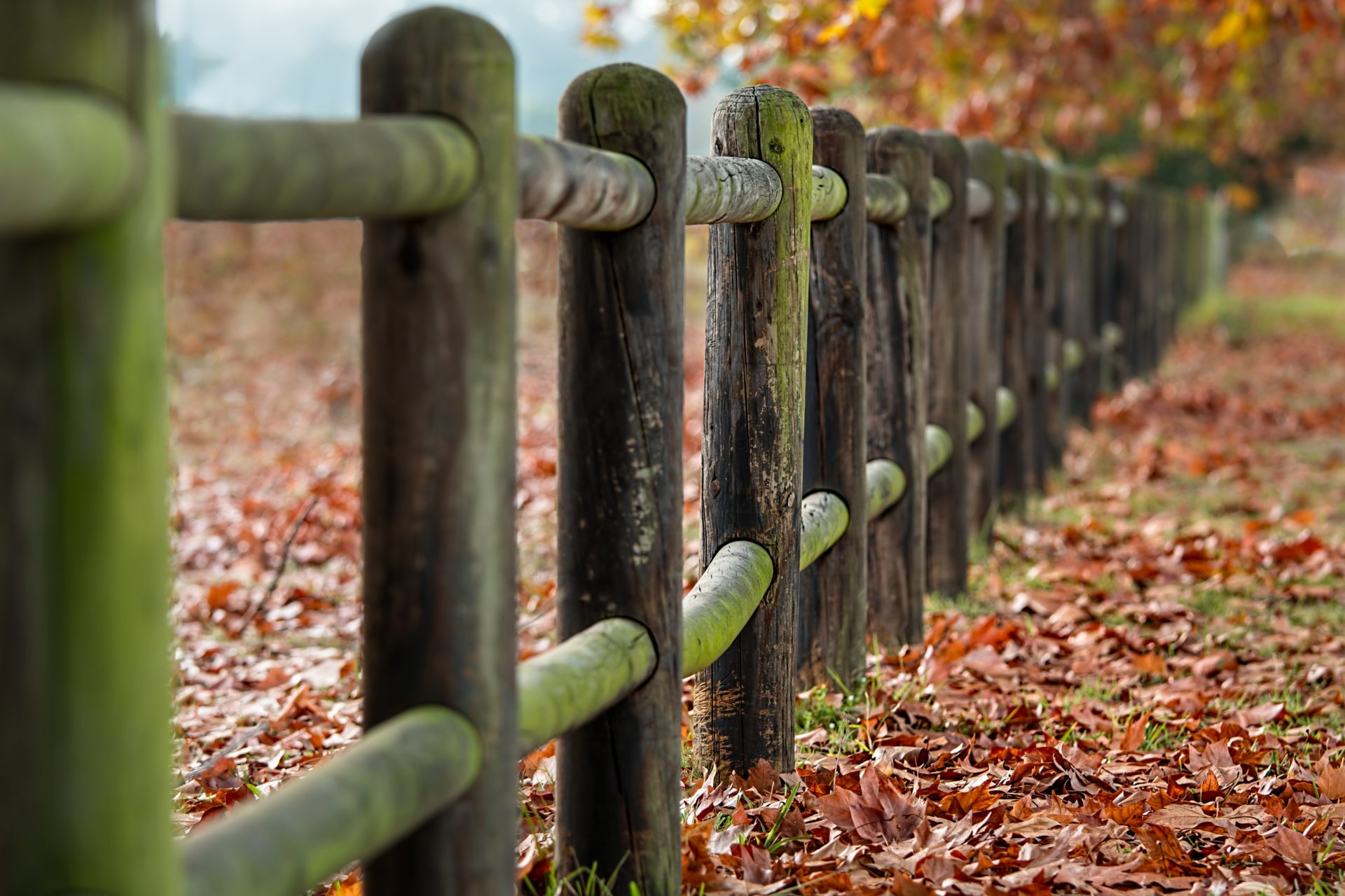 Fence in Woolacombe in Autumn